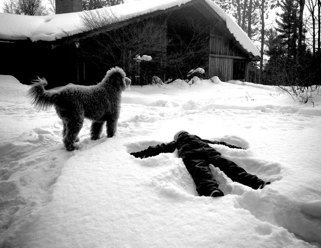 QVHoughPhoto Minnesota Duluth Goldendoodle Outdoors Snow Snowangel Blackandwhite IPhoneography IPhone4s