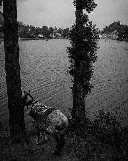Evening besides Mirik Lake, Darjeeling! . . . Lake Darjeeling Dark Moodygrams Blackandwhite Highcontrast Wideangle Jj_landscapes Foto_blackwhite Amateurs_bnw Bnw_planet Bnw_rose Bnw_landscape Bnw Travel Travelingram Natgeotravel Lonelyplanetindia Ig_india Ig_bengals OnlyinIndia IndiaLove Natgeo Betterphotography Onlyinbengal indiaphotoproject _oye