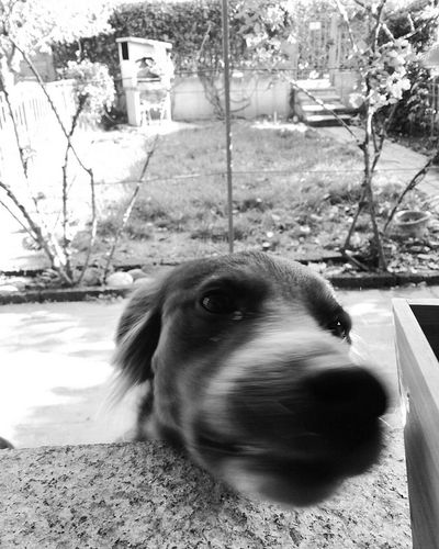 Maja the little terror. One Animal Pets Domestic Animals Dog Animal Themes Animal Outdoors No People Nature Sitting Italia Blackandwhite Cutie Cane Border Collie Close-up Muso
