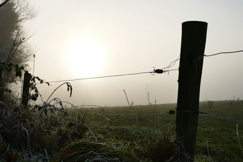 Foggy day.. Barbed Wire Boundary Day Dream States Ethereal Fence Fog Foggy Foggy Weather Forbidden Grass Landscape Nature No People Outdoors Plant Silhouette Silhouette Silhouette_collection Sky Softness Sunset Tree