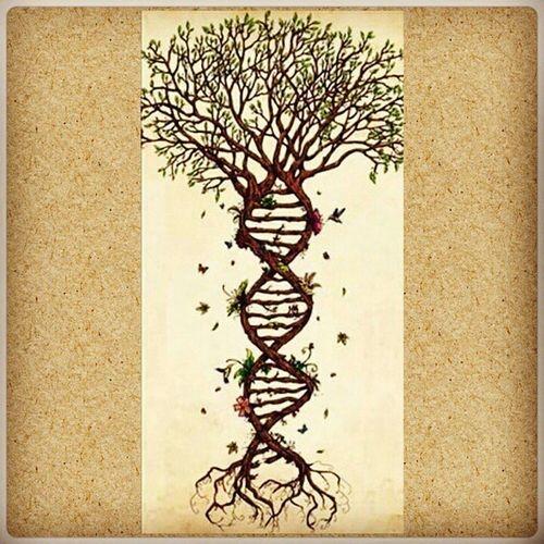 Graças a Deus por Rosalind, Wilkins, Watson, Crick e todos os demais envolvidos nessa descoberta. Dna Genetica 5linha3linha Genut Descoberta 1953 Gene Vida Duplahélice Estruturadna