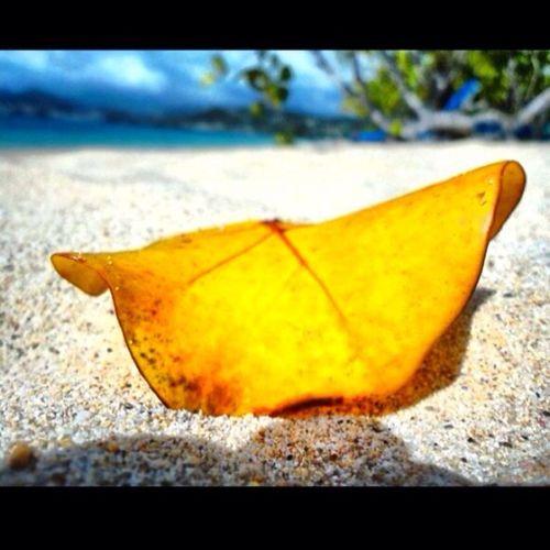Nature Sand Ilivewhereyouvacation Grenada Grandanse Leaves Simplebeauty  Wu_caribbean Westindies_colors