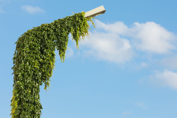 Low angle view of street light covered with ivy against sky