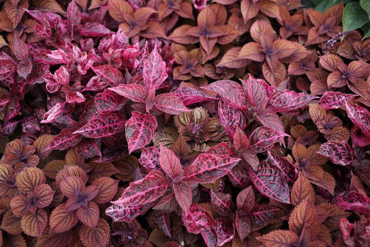 Full Frame Shot Of Purple Flowering Plants During Autumn