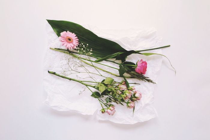 Flower Petal Flower Head White Background Studio Shot Directly Above White Color Fragility No People Freshness Leaf High Angle View Green Color Beauty In Nature Nature Indoors  Close-up Day Periwinkle Roses Paper Beautiful Still Life EyeEm Ready   AI Now Love Yourself
