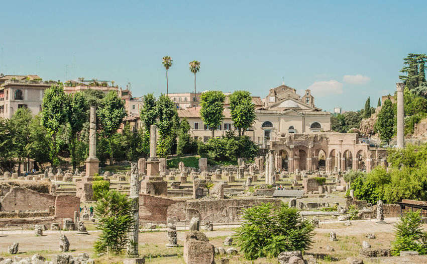 Trees in roman forum against sky