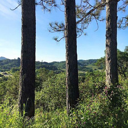 Santarosa California Trees View Hills Mountains Landscape