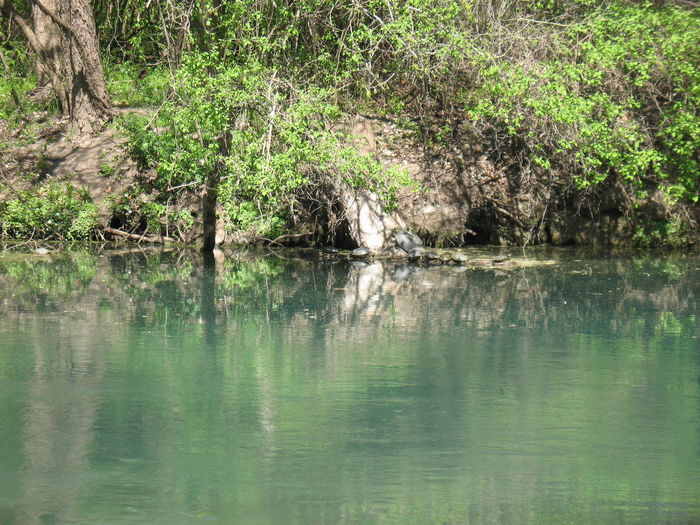 Canoeing River Banks River View Texas Hill Country Texas Landscape Beauty In Nature Day Lake Nature No People Outdoors Reflection River Rivers Texas Rivers Texas Water Ways Tranquil Scene Tranquility Tree Water