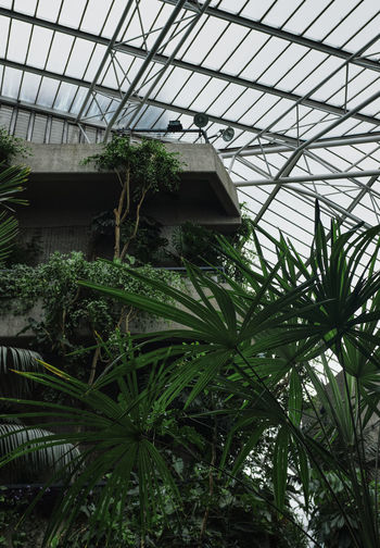 Low angle view of plants in greenhouse