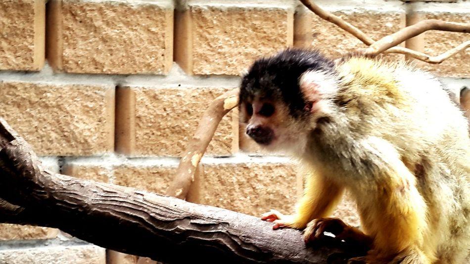 Monkey Jodyvford Animals South Africa