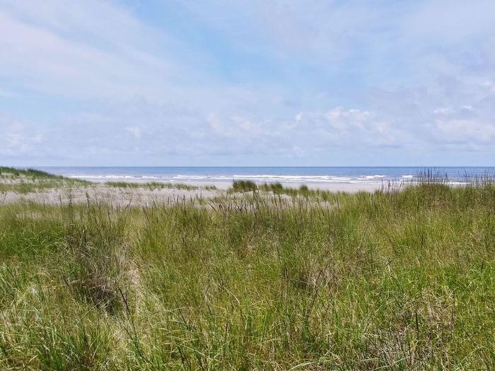 Dunes from Discovery Trail. Hotwashington Sunshine Dunes