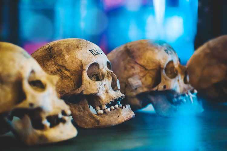 Bone  Close-up History Horror Human Skeleton Human Skull Indoors  Representation Selective Focus Skeleton Skull Spooky Still Life Table The Past