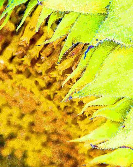Sunflower. Rotate your phone 90° left I took this from a different angle to capture the texture of its leaves. How about blue backlight =) 1) Princely_shotz 2) Ig_myshot 3) Ig_affair_weekly 4) Small_world_upclose 5) 5star_images 6) Macrongawi 7) Sn_may1 8) Mta_macro 9) Pic_groups 0) Macroclique 1) Kings_hubs 2) Pocket_family 3) Igglobalclubmacro 4) My_daily_macro 5) Fotofanatics_alltags_ 6) Total_macro 7) Flowersandmacro 8) 9vaga_flowerscolor9 9) Wms_macro 0) Flair_macro 1) Bpa_macro 2) Macroaddictsanonymous 3) Resourcemag 4) Tv_colors 5) Jj_indetail 6) ig_azhubs 7) excellent_macros 8) 9vaga_macro9 9) ig_closeups 0) splendid_shotz