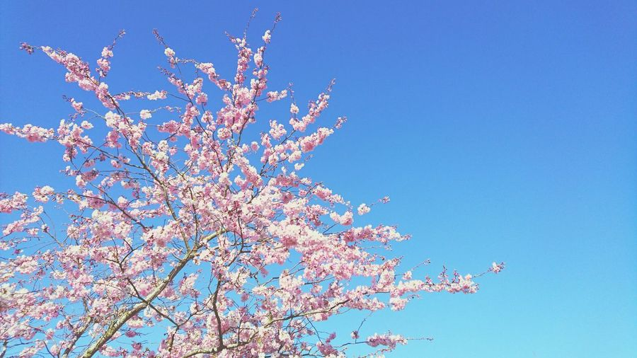 Low angle view of tree against blue sky