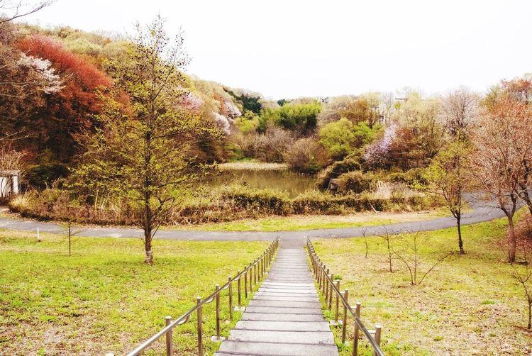 宇津貫緑地。兵衛川の源流でもある。 八王子 みなみ野 宇津貫緑地 池