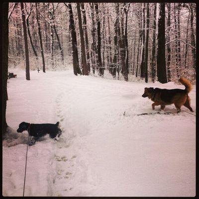 Don & Coraggio Instavse Winter Dog