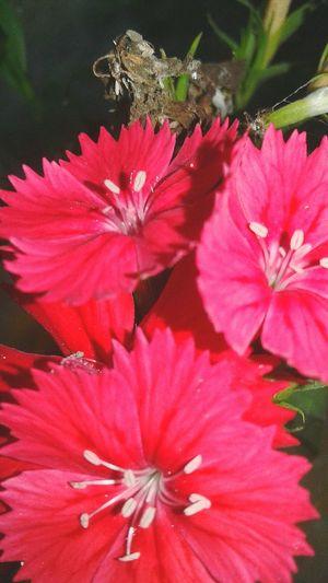 Flower Head Flower Petal Pink Color Springtime Pollen Close-up Blooming Plant