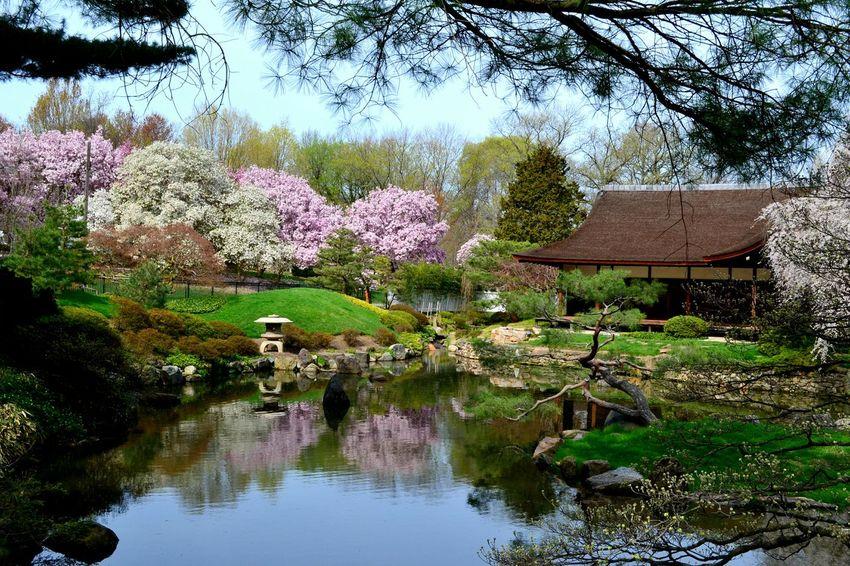 Japanese Garden Philadelphia Fairmountpark Cherry Blossoms Showcase April Investing In Quality Of Life