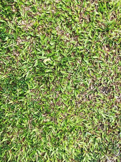 Greenery Fields #Nature  #grass #greenery