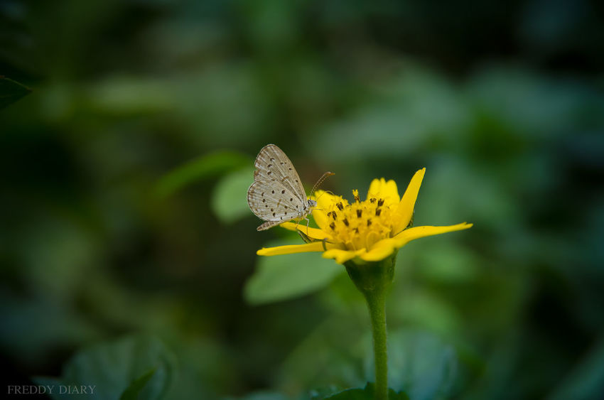 Beauty In Nature Butterfly - Insect Close-up Day Flower Flower Head Fragility Freshness Insect Nature No People Outdoors Petal Plant Yellow