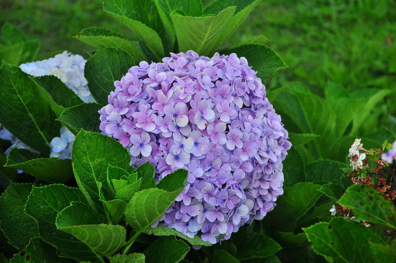 Beauty In Nature Blooming Close-up Day Flower Flower Head Fragility Freshness Green Color Growth Leaf Nature No People Outdoors Petal Plant Purple