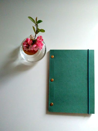studious Chaenomeles Japonica Bud Vase Pink Flower Notebook EyeEm Selects Flower White Background Flower Head Close-up Green Color Blooming Vase Plant Life