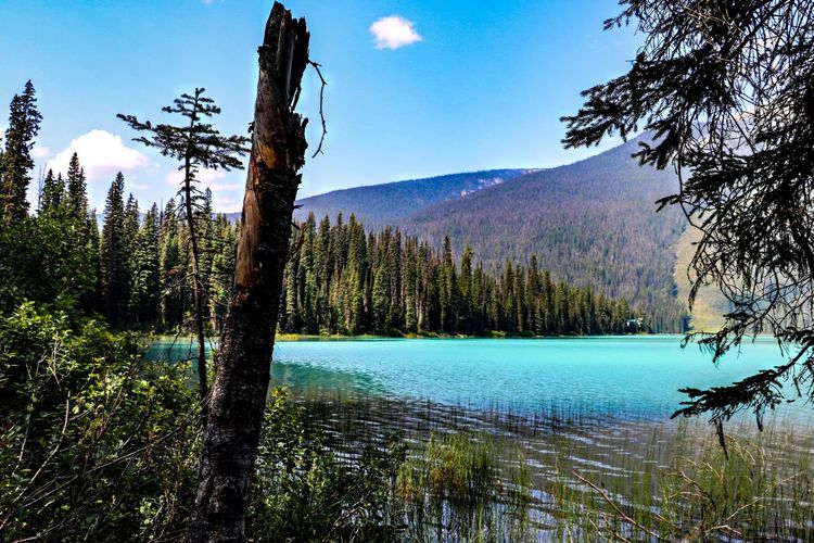 British Columbia, Canada Beauty In Nature British Columbia Emerald Lake Emerald Lake,canada Idyllic Lake Mountain Nature No People Outdoors Scenics - Nature Tranquil Scene Tranquility Tree Turquoise Colored Water WoodLand