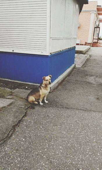 Dog Street Streetphotography Sad Saddog Verynice Evening Mimimi