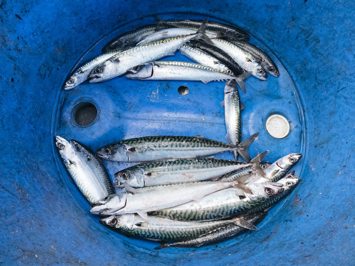 High angle view of fish in blue container