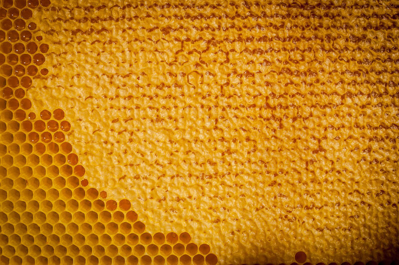 Full frame shot of honeycomb