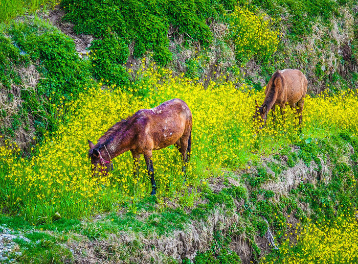 Animal Animal Themes Beauty In Nature Day Field Forest Full Length Grass Grassy Green Green Color Growth Horses Landscape Lush Foliage Mammal Millet Nature No People Outdoors Plant Tranquility Tree Wildlife