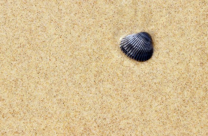 Coquillage Australia Holiday Hot SHELLFISH  Stradbroke Island Sunny Travel Beach Beauty In Nature Black Close-up Day Grain Nature No People Outdoors Pattern Plage Queensland Sand Sandy Shell Simplicity Textured
