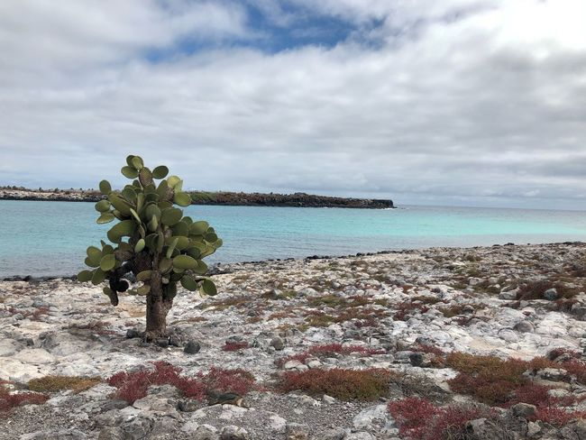 Sea Sky Horizon Over Water Nature Beauty In Nature Scenics Tranquility Water Tranquil Scene No People Outdoors Beach Day Cactus