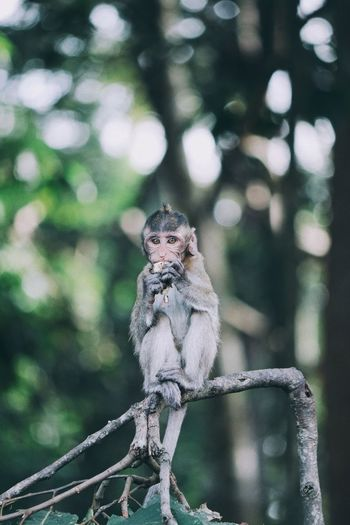 Monkey sitting on tree