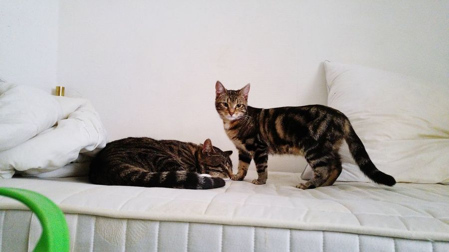 Cats Relaxing On Bed At Home