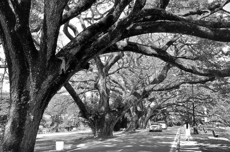Tree Day Outdoors Nature No People Growth Branch Beauty In Nature Sky Blackandwhite Photography Taipinglakegarden Taipingperakmalaysia