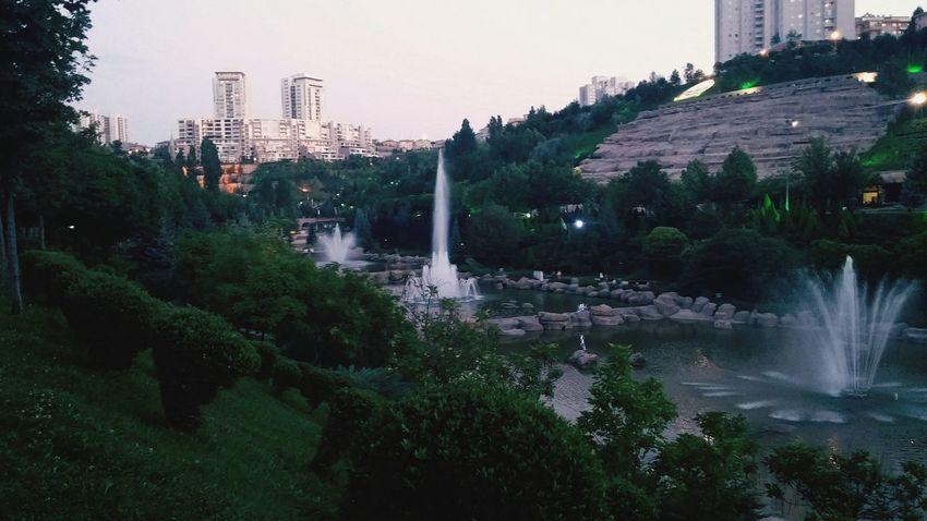 Valley Ponds Green Park Tree