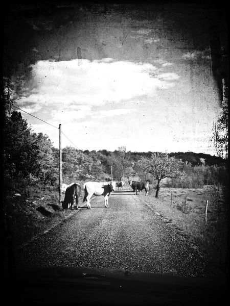 On The Road_bnw_friday