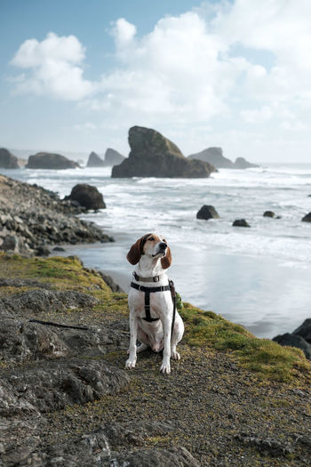 Dog standing on rock by sea against sky