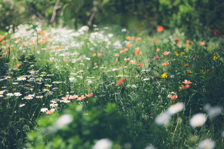 Full frame shot of flowers on field