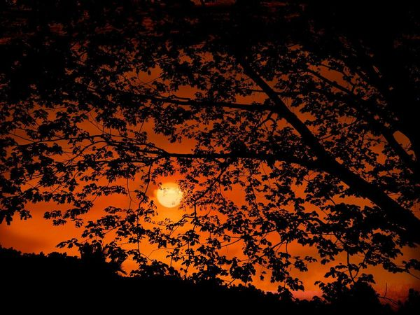 ..aS... uSuaL... suN.. riSes.. iN.. tHe.. easT.. Sunrise Silhouette Nature Tree Beauty In Nature Outdoors Sky Close-up Romantic Sky Kerala Day Tranquility Colorful Simple Quiet Love Dreams Expressions Dramatic Sky Orange Color Silence