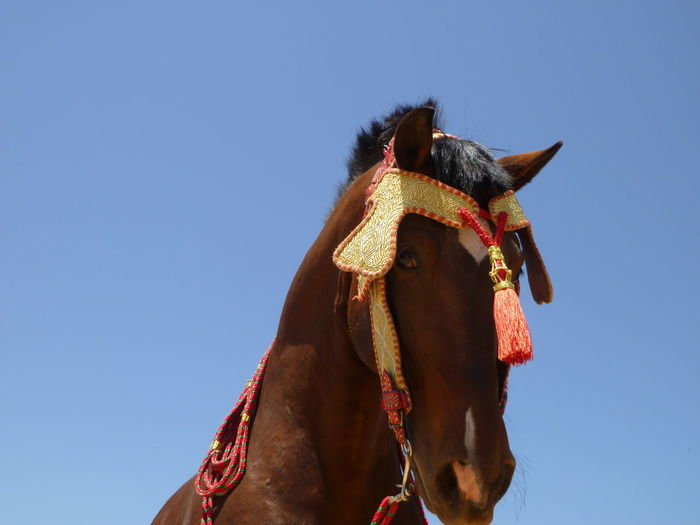 Low angle view of a horse against the sky