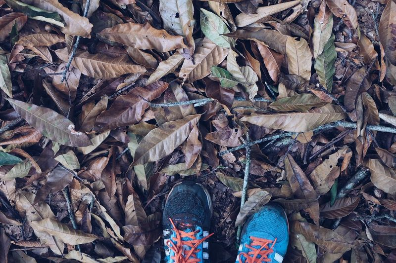 Two Is Better Than One --Not all those who wonder are lost.-- The very purpose of our life is to seek happiness. Flowers Nature Leaf Change Autumn Shoe Personal Perspective Standing Close-up High Angle View Brown Hikingadventures