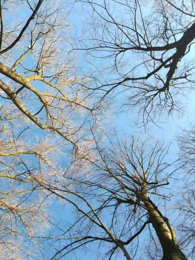 My Year My View Sky Low Angle View Tree Nature No People Outdoors Clear Sky Bare Tree Blue Sky Sky And Trees Adapted To The City The City Light