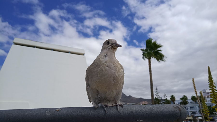 Low angle view of bird perching on retaining wall against sky
