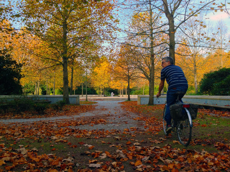 Healthy. Autumn Tree Change Plant Part Leaf Plant One Person Full Length Nature Leisure Activity Day Real People Park Orange Color Park - Man Made Space Falling Rear View Outdoors Land Lifestyles Leaves Autumn Collection Healthy Winter Cycling