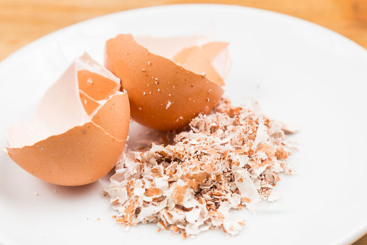 Close up of eggshell that is broken into small pieces. Eggshell are good source of calcium. Calcium Close-up Egg Eggshell Food Food And Drink Freshness Healthy Eating Ingredient Meal Plate Ready-to-eat Recycled Shell Still Life Studio Shot Wellbeing
