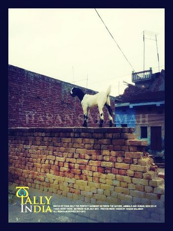 Really india is the wonderland... : ) photo was taken by me