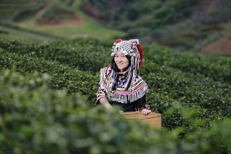 Hill tribe Asian woman in traditional clothes collecting tea leaves with basket in tea plantations terrace, Chiang mai, Thailand collect tea leaves Selective Focus Food And Drink One Person Women Rural Scene Growth Front View Agriculture Food Hat Lifestyles Plant Nature Farm Landscape Adult Freshness Land Outdoors