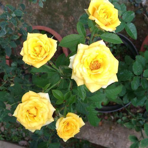Flowers No People NTB Lombok Island Rumahalir DELTA API Beauty In Nature